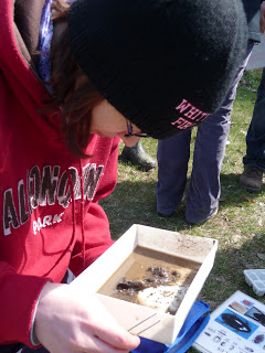 Jess spreads a portion of her sample out into a tray making it easier  to find and identify stream invertebrates.