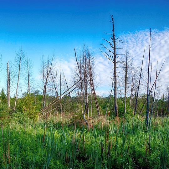 Harper-Park-Wetland-Panorama-2460-lowrez (2)