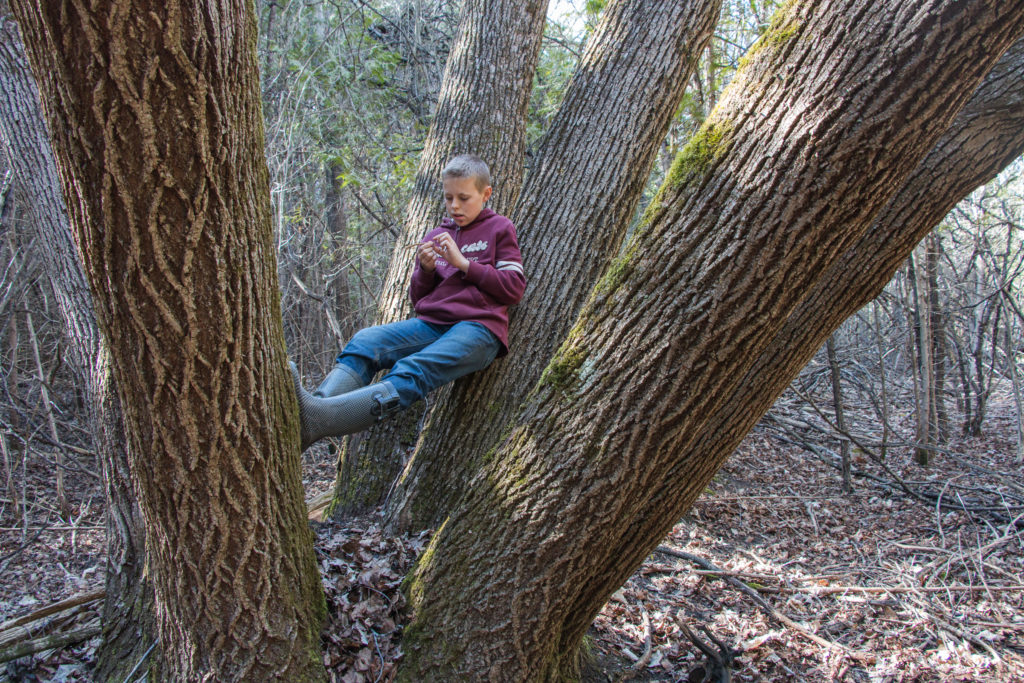 Young boy sits between the trunks of a massive basswood tree.