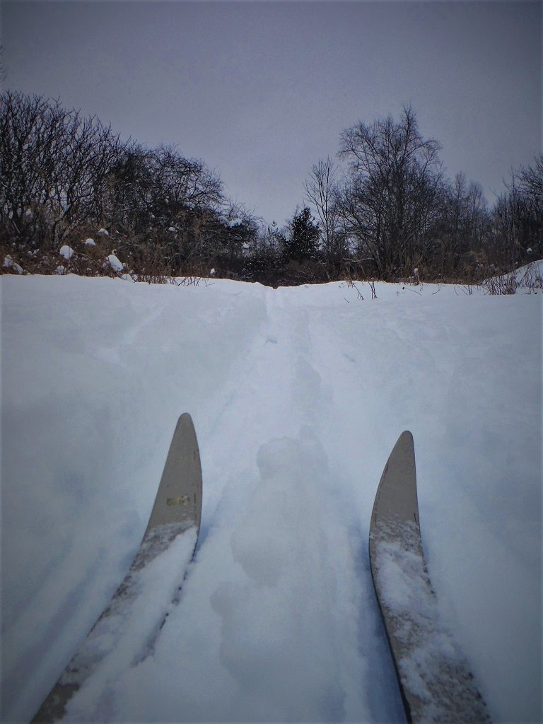 Cross Country Skiing in Harper Park!